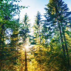 trail in the woods. Beauty world. Carpathians Ukraine Europe